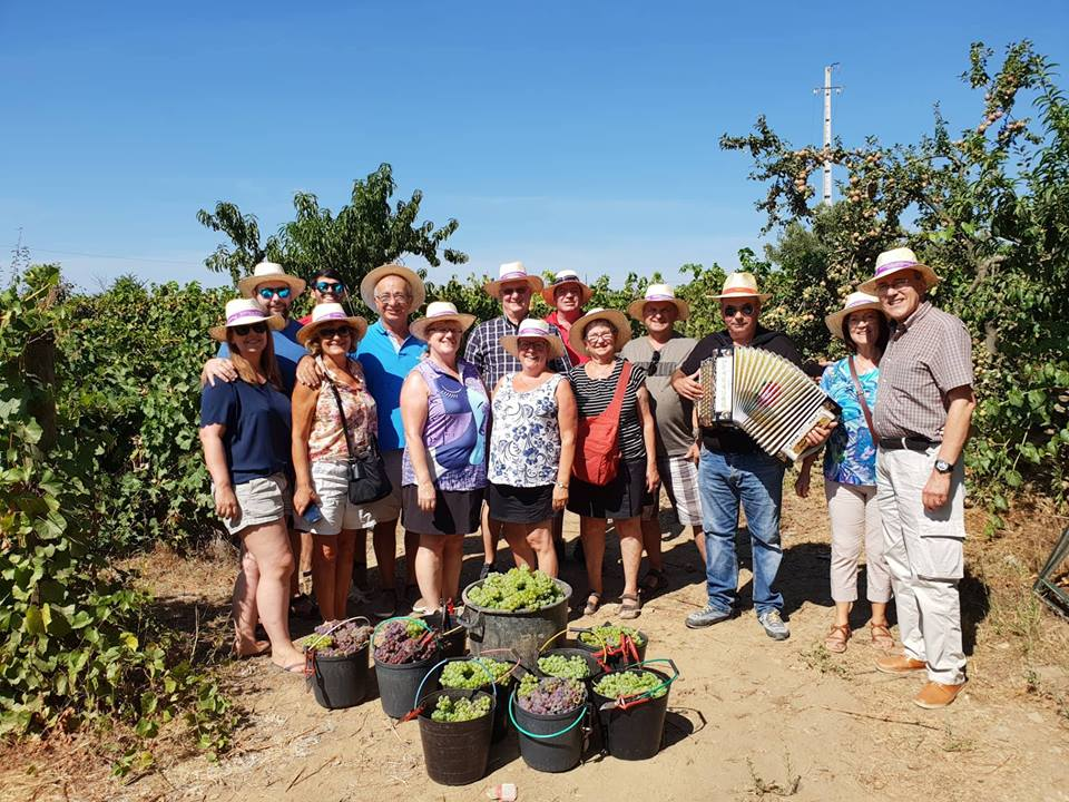Douro Valley Harvest festival and experience - Living Tours