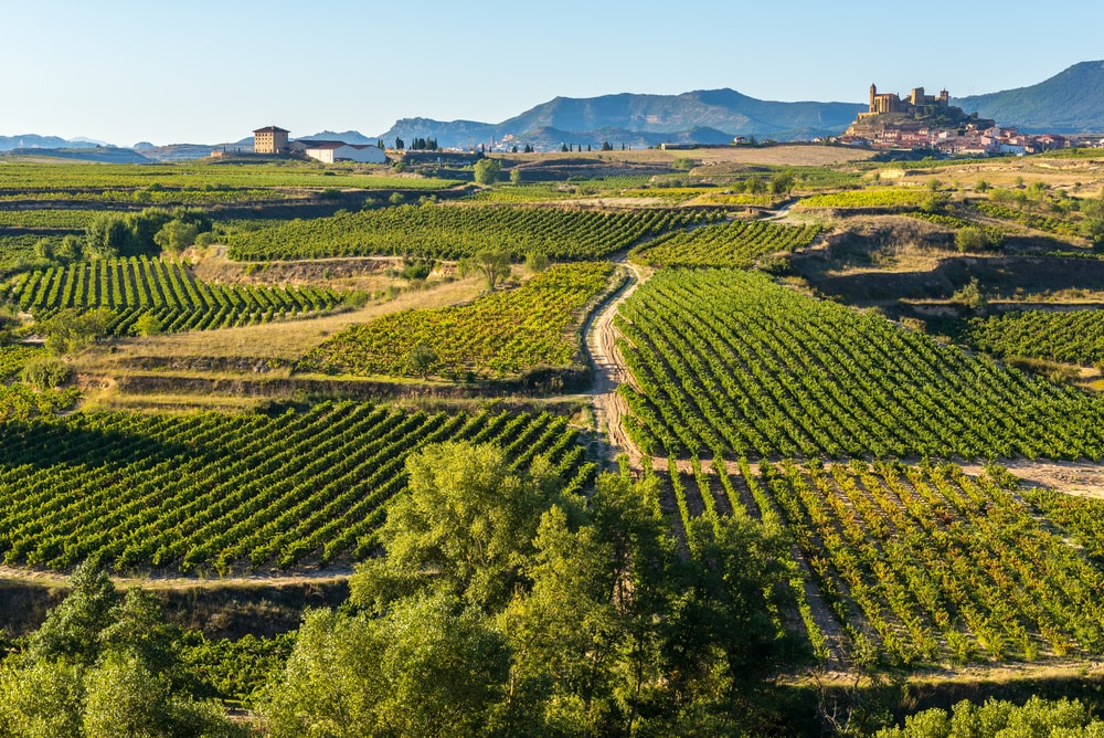 Wineries near San Sebastian