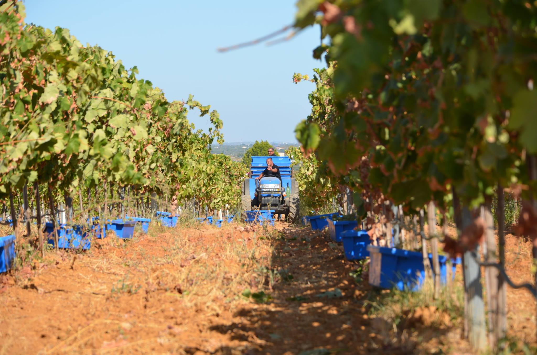 Wine Tour in the Algarve - Living Tours