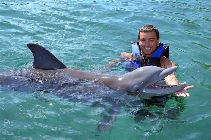 Swimming with Dolphins in Azores - Living Tours