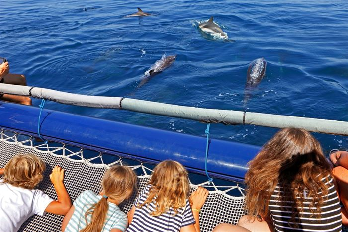 Golfinhos Onservação Grutas Algarve