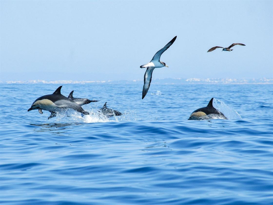 Dolphins and Barbecue Algarve