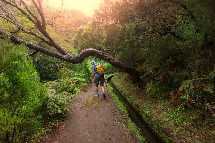 Madeira Levadas Walk - Living Tours