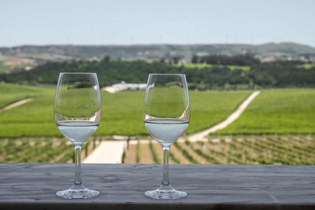 Tour a Pé - Visite uma Vinícola em Torres Vedras com Degustação de Vinhos