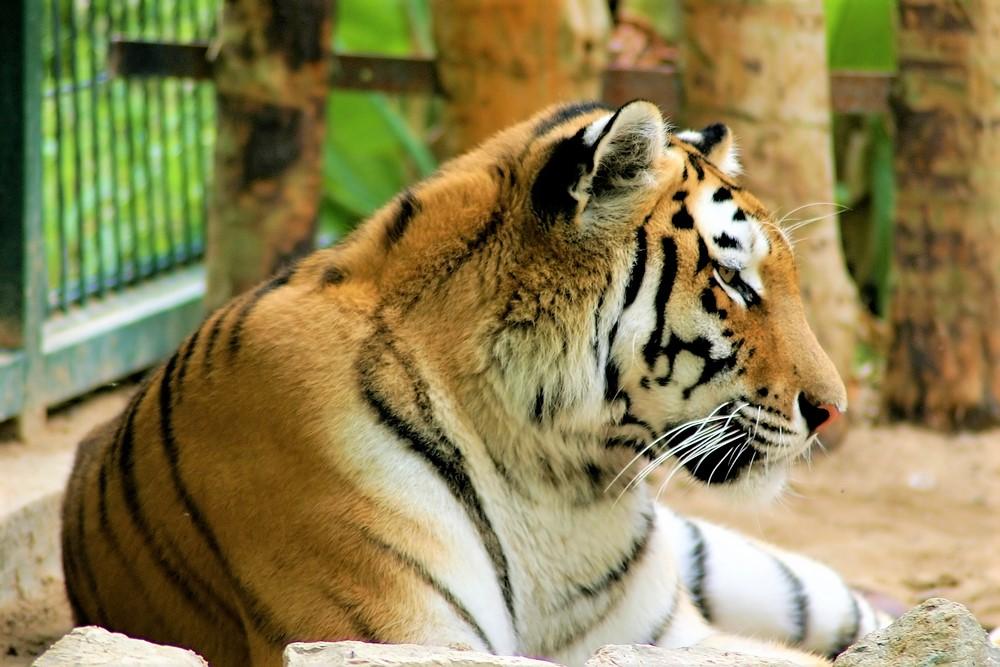 Panoramic bus + Zoo - Living Tours