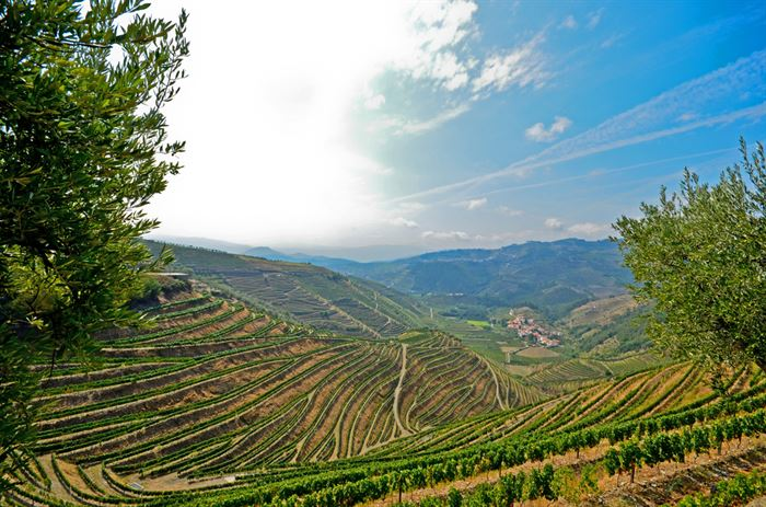 best douro valley tours - Living Tours