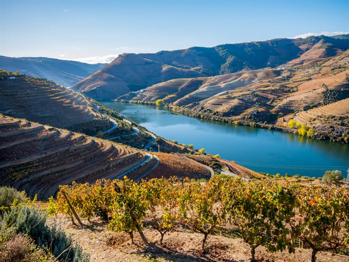Private Wine Tour at Douro Valley - Living Tours