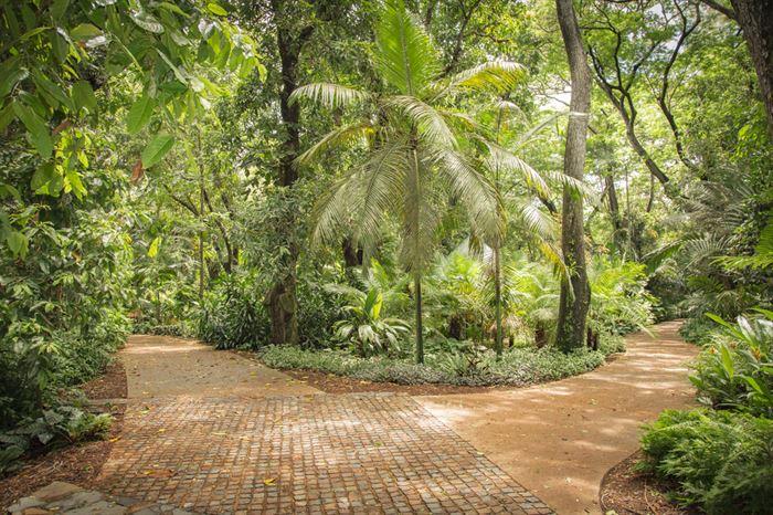 Palmetum Tenerife - Living Tours