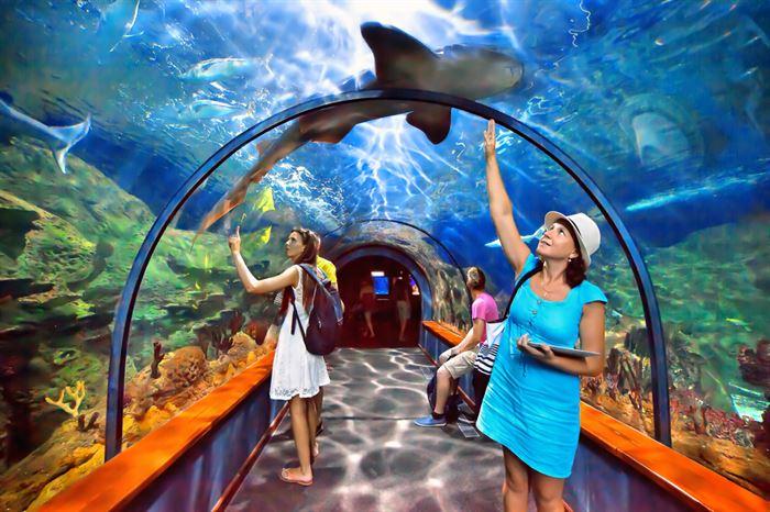 Teide e Entrada no Zoo Loro Parque - Living Tours